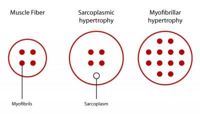 Jenis Hipertrofi