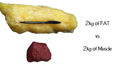 Berat Otot vs. Berat Lemak