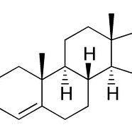 Paras Testosteron